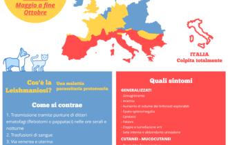 infographic leishmaniosi veterinaria cani bianca