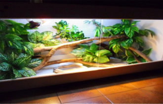 Foto di un terrario per rettili, pieno di piantine